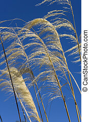 Blowing In The Wind - Wild grass blows in the wind against a...
