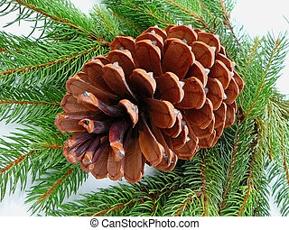 Pine cone with green needles
