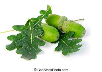 Acorns oak leaves - Acorns with green oak leaves close up