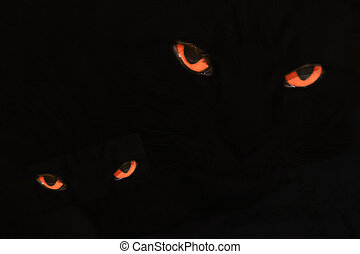 Evil Cat Eyes on Black - Pair of red-orange evil looking cat...