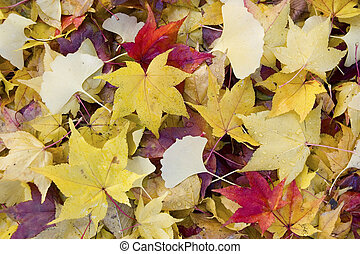 fallen leaves - mixed red and yellow fallen leaves