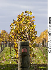Autumn Vines 03