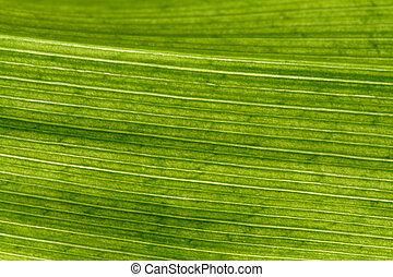 Natural background - leaf in closeup