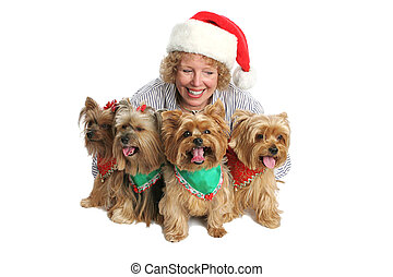 Proud Yorkie Owner - A group of yorkshire terrier dogs...