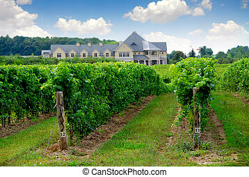 Vineyard and winery