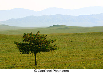 South Park - Short, lone pine tree with blue layered hills...