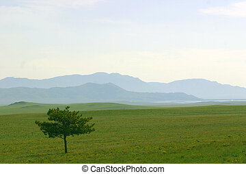 South Park - Lone pine tree and blue layered hills in South...