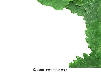 oak leaves frame #2