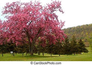Flowering Tree - Pink flowering tree