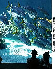 Aquarium - Children watch fish in an aquarium