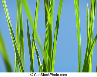 green grass - Close-up of fresh green grass straws against...