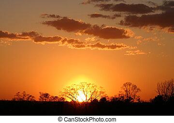 Golden Sunset - Sun Setting Behind a Treeline on a Winter...