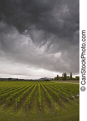 Winery - Rainclouds roll over a vineyard in Hawke\'s Bay,...
