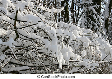 Snow-covered - Digital photo of with snow covered branches.