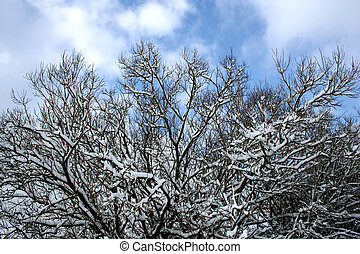 Snow-covered - Digital photo of with snow covered branches