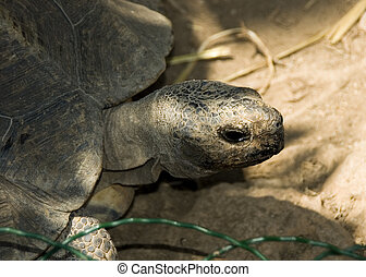 Tortoise - A photo of a tortoise