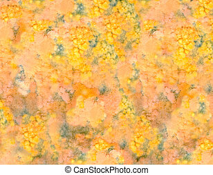 Mold - Close-up of mold on old food
