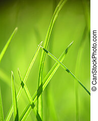 green grass - Perspective close-up of green grass with soft...