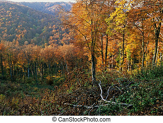 Autumn colors - Wood and tress in autumn colors