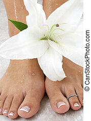 lily #2 - wet feet and madonna lily