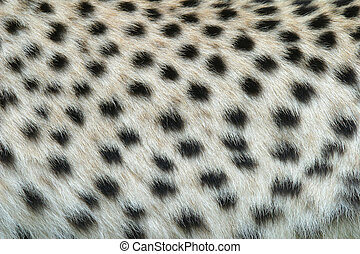 Skin of the leopard - Sample of the leopard