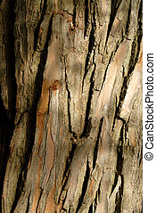 Tree Bark - Willow Tree Bark For Background Use