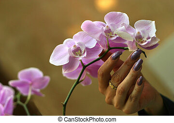 Orchid - The female hand touches petals of an orchid