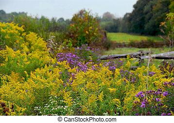 Rural landscape in Ontario, Canada