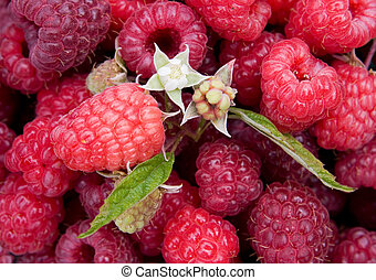 Raspberry. Background