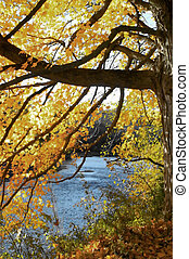 Fall foliage - Beautiful scenic shot of fall foliage in...