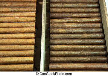 Cigars in humidor - Hand made cigars in Cuba.