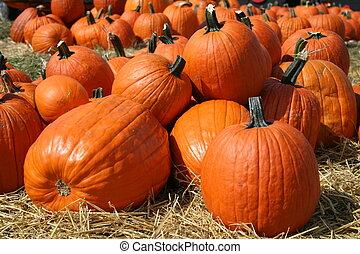 Pumpkins awaiting a new home