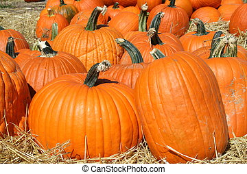 Pumpkins - Harvested pumpkins