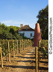 Parisian vineyard - Vineyard at the house of gardening in...