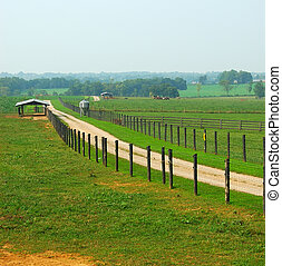 Cattle Ranch in Kentucky USA in the summertime