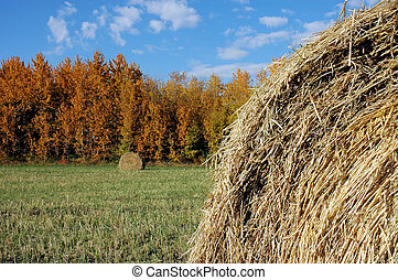 Fall Hay Bales - Hay field in autumn