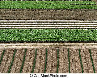 agriculture bkgrnd -  rising agricultural plants background