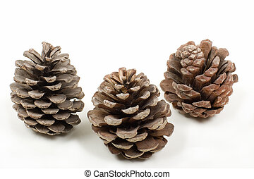 Three Pine Cones - Three Weathered Pine Cones, on white