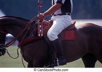 Polo official on horseback - Polo referee / umpire on...