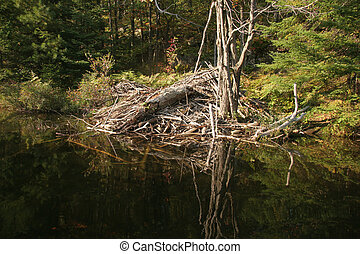 Beaver lodge in Canada