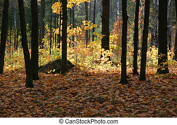 Autumn woods with contrasting light patterns - in Canada