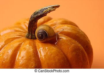 Pumpkin Snail - Snail on pumpkin