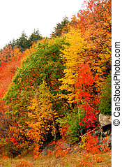 Fall forest background - Colorful yellow and red fall forest...