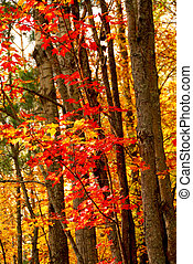 Fall forest background - Colorful fall forest background...