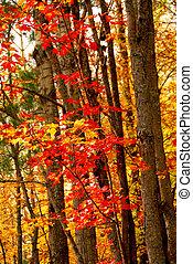 floresta, fundo, outono