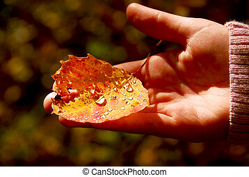 Hand fall leaf - Childs hand holding fall aspen leaf with...