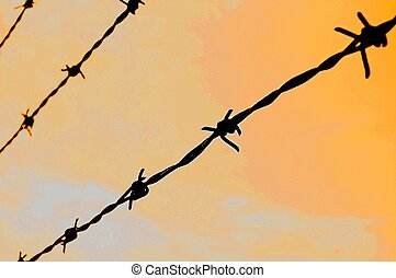 barbed wire - barb wire