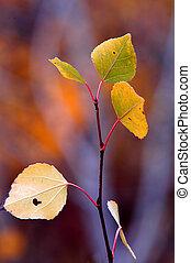 Autum Birch Leaves