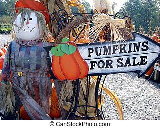 Pumpkins For Sale - A sign advertising pumpkins for sale...