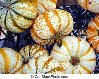 Tiny White Pumpkins - Tiny white pumpkins striped with...